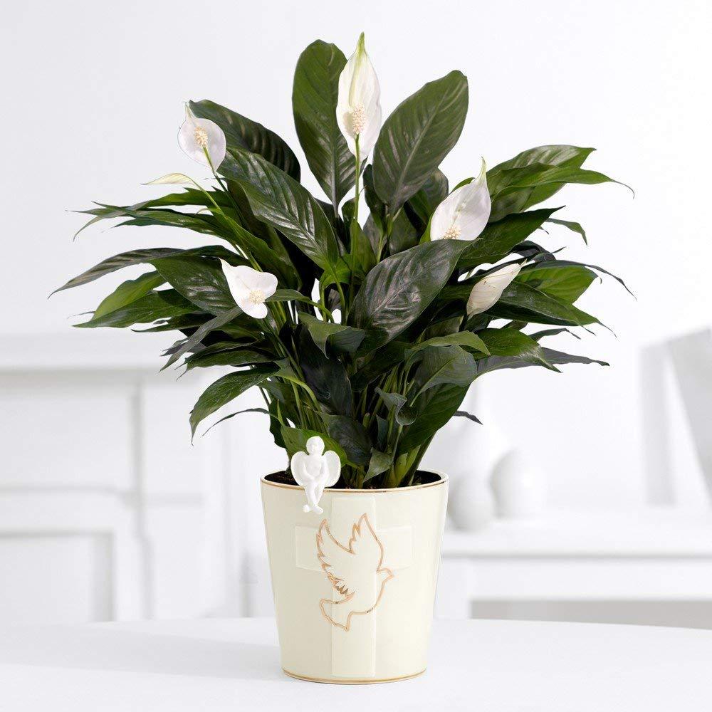 Bathroom Plants That Absorb Moisture   Plant Your World